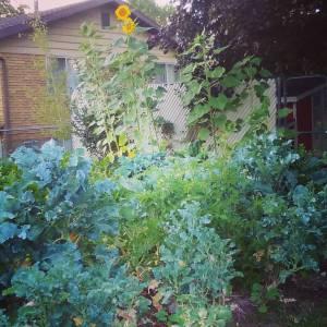 warum Sie falsch kompostieren