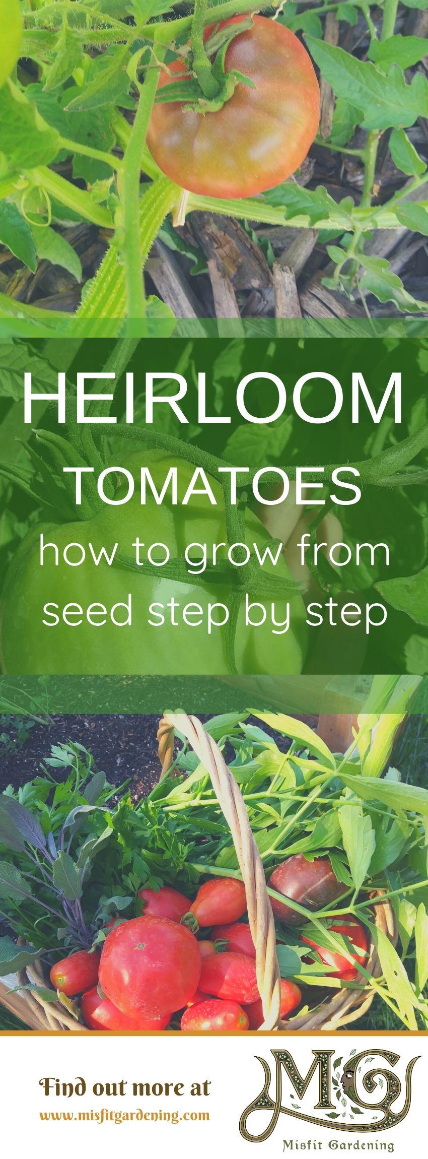 Finden Sie heraus, wie Sie Erbstücktomaten in Ihrem Garten anbauen und wie Sie sie aus Samen anbauen. Klicken Sie hier, um mehr über den Anbau von Tomaten zu erfahren, oder stecken Sie ihn fest und speichern Sie ihn für später. #Garten #Nongmo #Haus