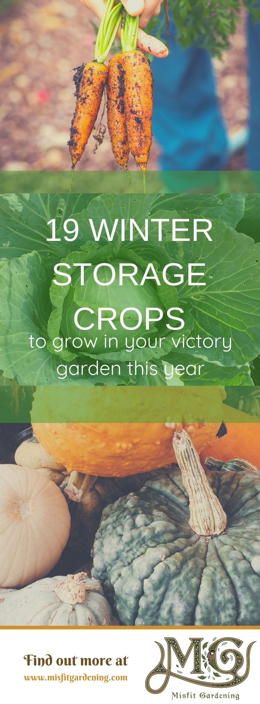 Entdecken Sie 19 klassische Winterlagerpflanzen, die Sie in dieser Saison in Ihrem Siegesgarten auf Ihrem Gehöft anbauen können. Klicken Sie hier, um mehr zu erfahren, oder stecken Sie es fest und speichern Sie es für später. #Garten #Nongmo #Haus