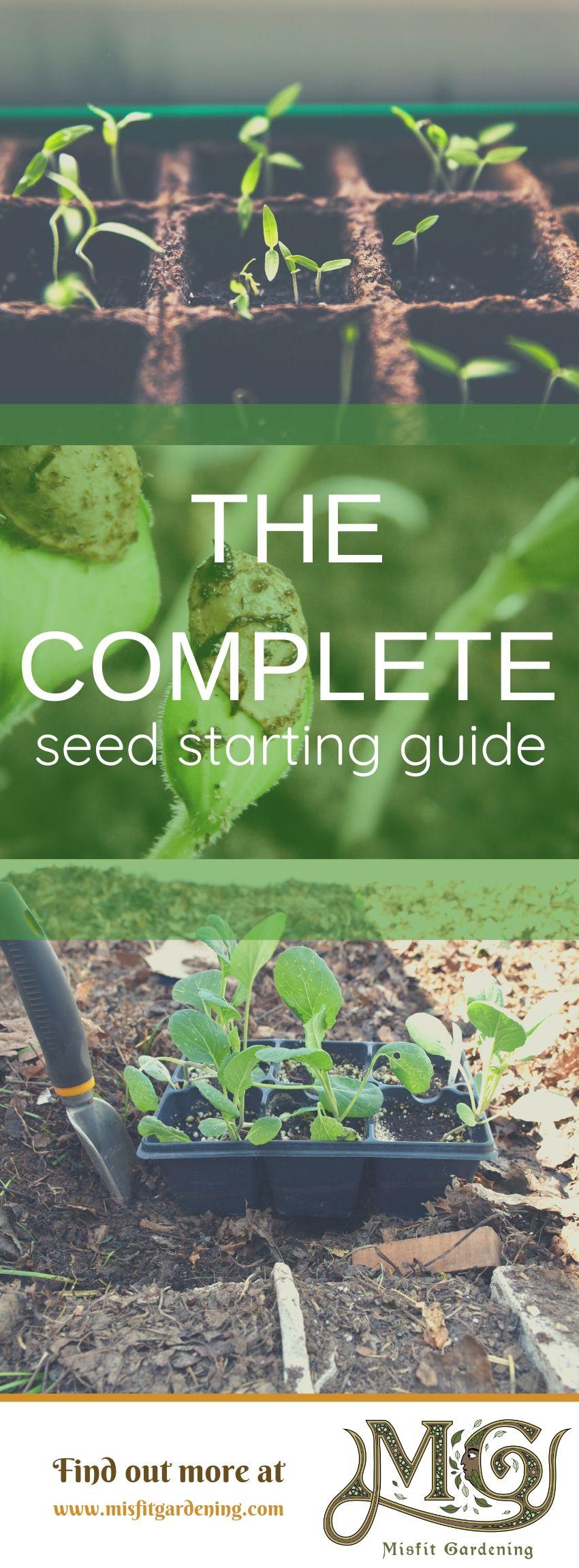 In der vollständigen Anleitung zum Starten von Samen erfahren Sie, wie Sie Ihren Garten aus Samen züchten können. Klicken Sie hier, um mehr über das Starten von Samen zu erfahren, oder stecken Sie sie fest und speichern Sie sie für später. #Garten #Nongmo #Haus