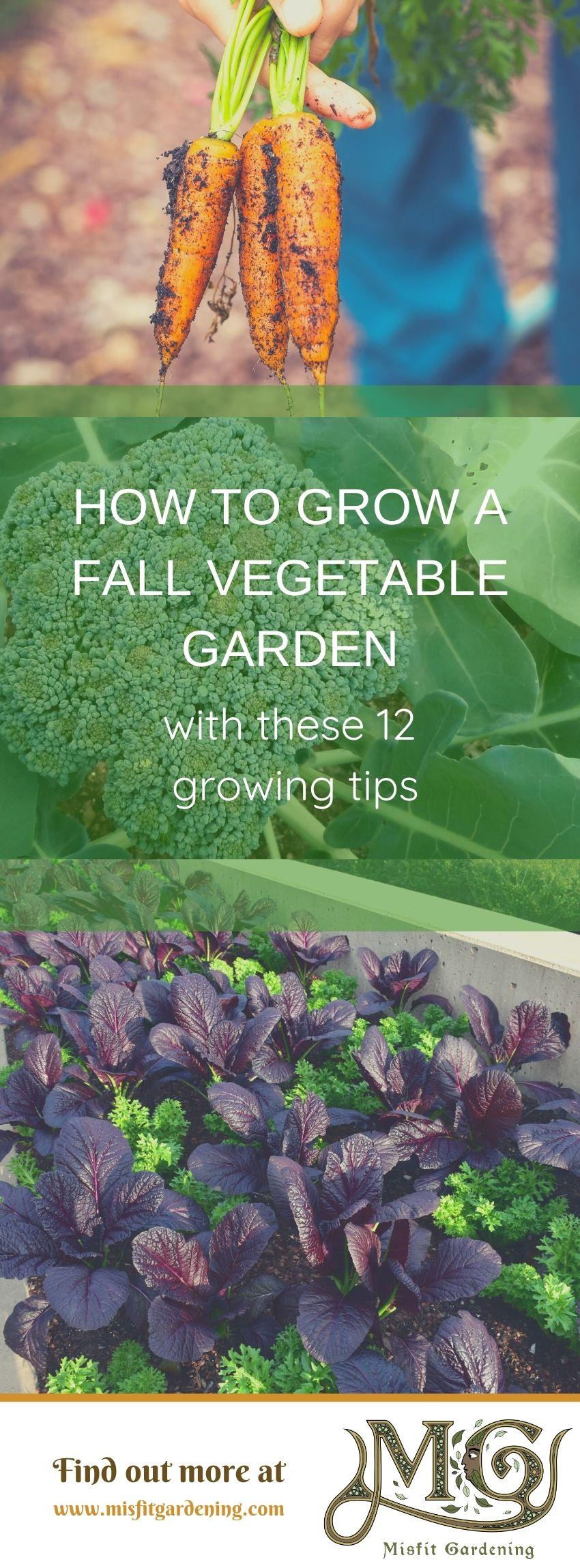 Klicken Sie hier, um zu sehen, wie Sie einen Herbstgemüsegarten anbauen oder anheften und für später speichern. #Homesteading #Garten