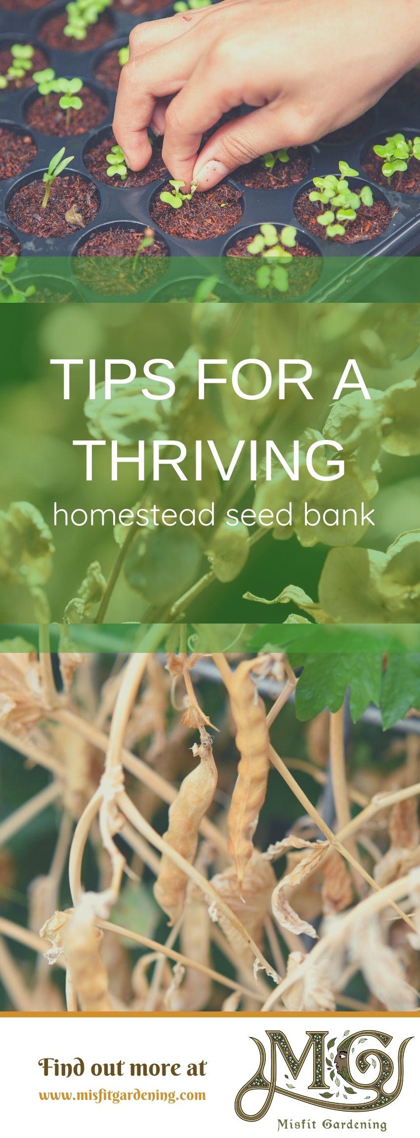 Klicken Sie hier, um Tipps für eine florierende Samenbank anzuzeigen, oder stecken Sie sie fest und speichern Sie sie für später. #homestead #organic #gardening
