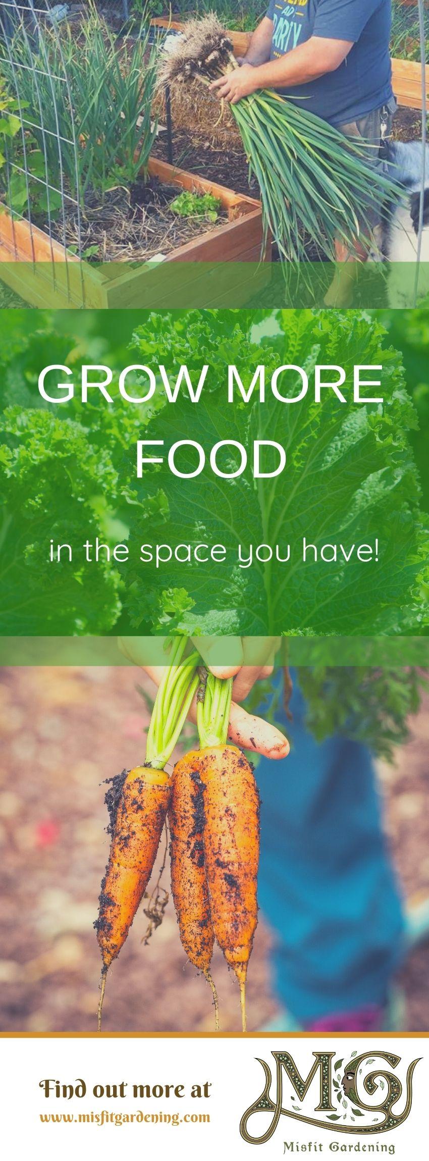 Klicken Sie hier, um zu erfahren, wie Sie mit intensiver Gartenarbeit mehr Lebensmittel in dem Raum anbauen können, den Sie haben, oder stecken Sie sie fest und speichern Sie sie für später. #homestead #realfood #gardening