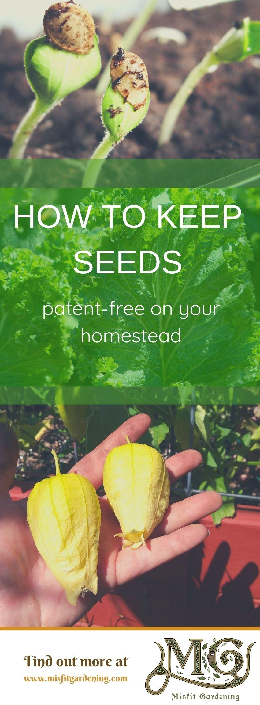 Klicken Sie hier, um zu erfahren, warum Homesteaders patentfreies Saatgut haben sollten, oder stecken Sie es fest und speichern Sie es für später. #homestead #realfood #gardening