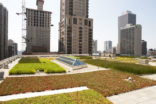Striking Green Roof Garden By Hoerr Schaudt Landscape Architects 5
