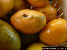 mango-formosa_01