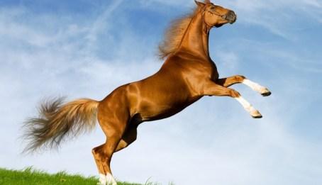 caballo-para-consumo