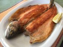 Pesca de truchas en Río Ceballos