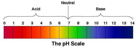 pH Scale - Misha Almira