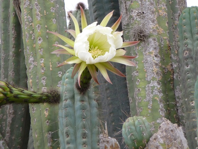 San Pedro, Ayahuasca, Deep Healing With Plant Medicines- Misha Almira