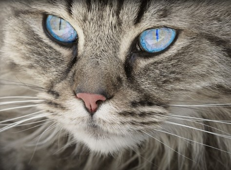 Top 3 Ways CBD Oil Can Help Cats