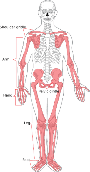 Top 3 Ways CBD Oil Helps with Osteoporosis