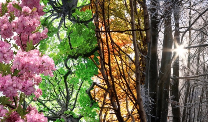 How Following the Seasons Can Support Your Energy Medicine