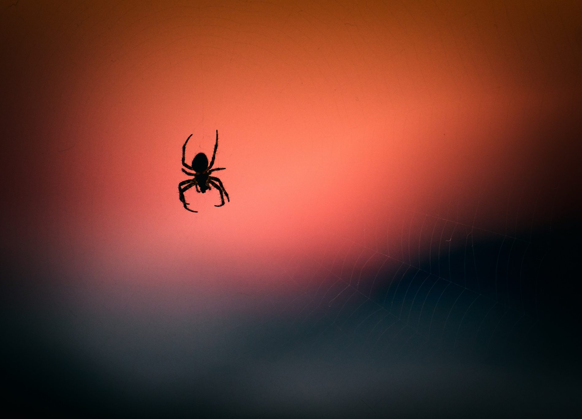 A Spider on LSD and a Journey to Build the Perfect Web