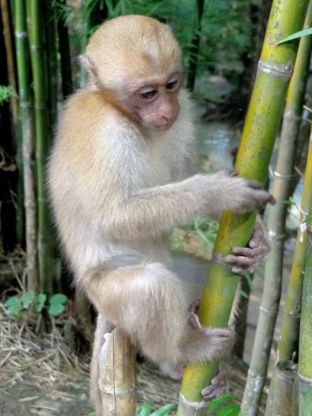 A monkey in Thailand