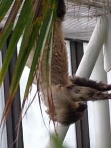 Sloth in the National Aquarium in Baltimore