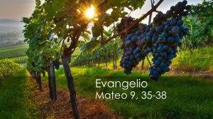 Mateo 9, 35-38