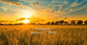 Mateo 12, 1-8
