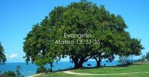 Mateo 13,31-35