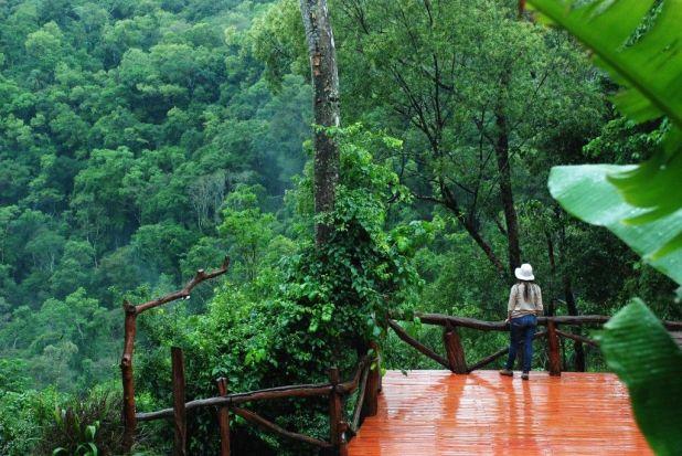 Resultado de imagen para Selva Misionera