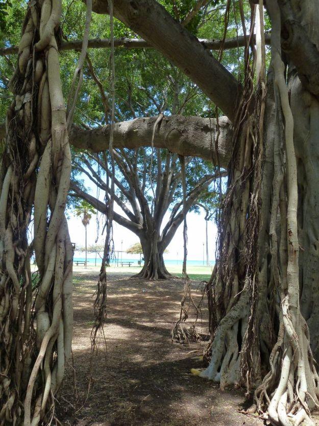 Hawaii_BanyanTree3 (768x1024)