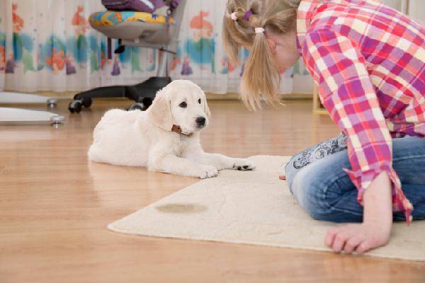 Una niña mirando a un perro que ha orinado en la alfombra.