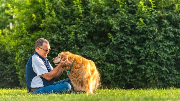 Un hombre caucásico de mediana edad sentado en la hierba acariciando / frotando las orejas de su golden retriever mayor sordo mientras el perro le da una pata al atardecer.  Este escenario podría ser su patio trasero o un parque público.