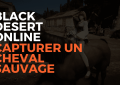 black desert online capturer un cheval sauvage, capturer cheval sauvage bdo, bdo france, black desert france, pearl abyss, misplay, tuto capturer un cheval savuage sur bdo