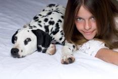 Fotografias mascotas y dueños en Madrid