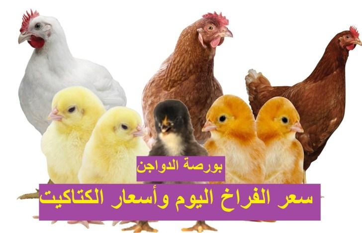 أسعار الدواجن الثلاثاء.. سعر الفراخ اليوم 4 مايو وسعر الكتكوت الابيض وأسعار بورصة الدواجن 13