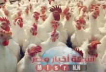 Photo of شبكه أخبار مصر ترصد لكم أسعار الدواجن اليوم الخميس ١٣ اغسطس 2020