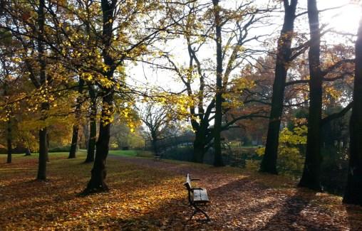 im Rotehornpark im Herbst