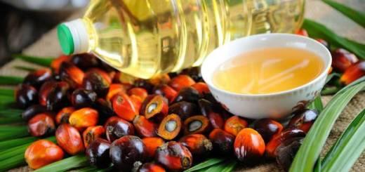 Где производят пальмовое масло?