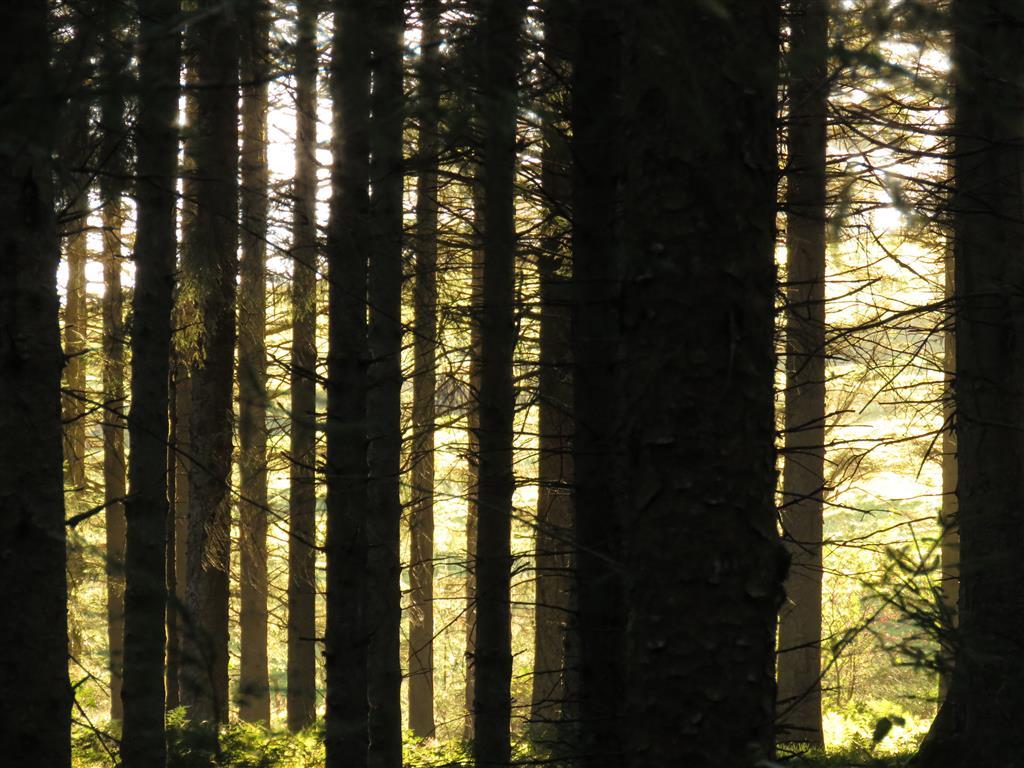 Enjoying a walk in Hafren Forest, Wales
