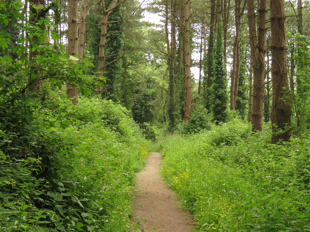 Along a woodland path between Beer and Seaton