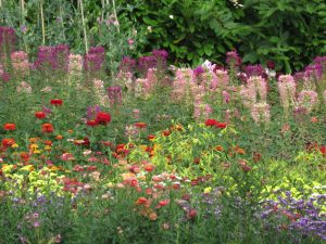 Flower garden, Somerset Lavender Farm