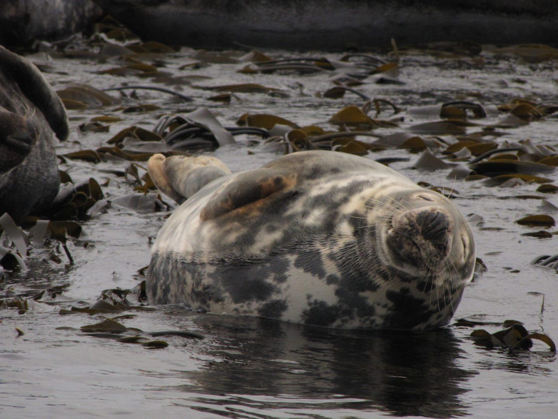 Seal, Farne Islands, Northumberland