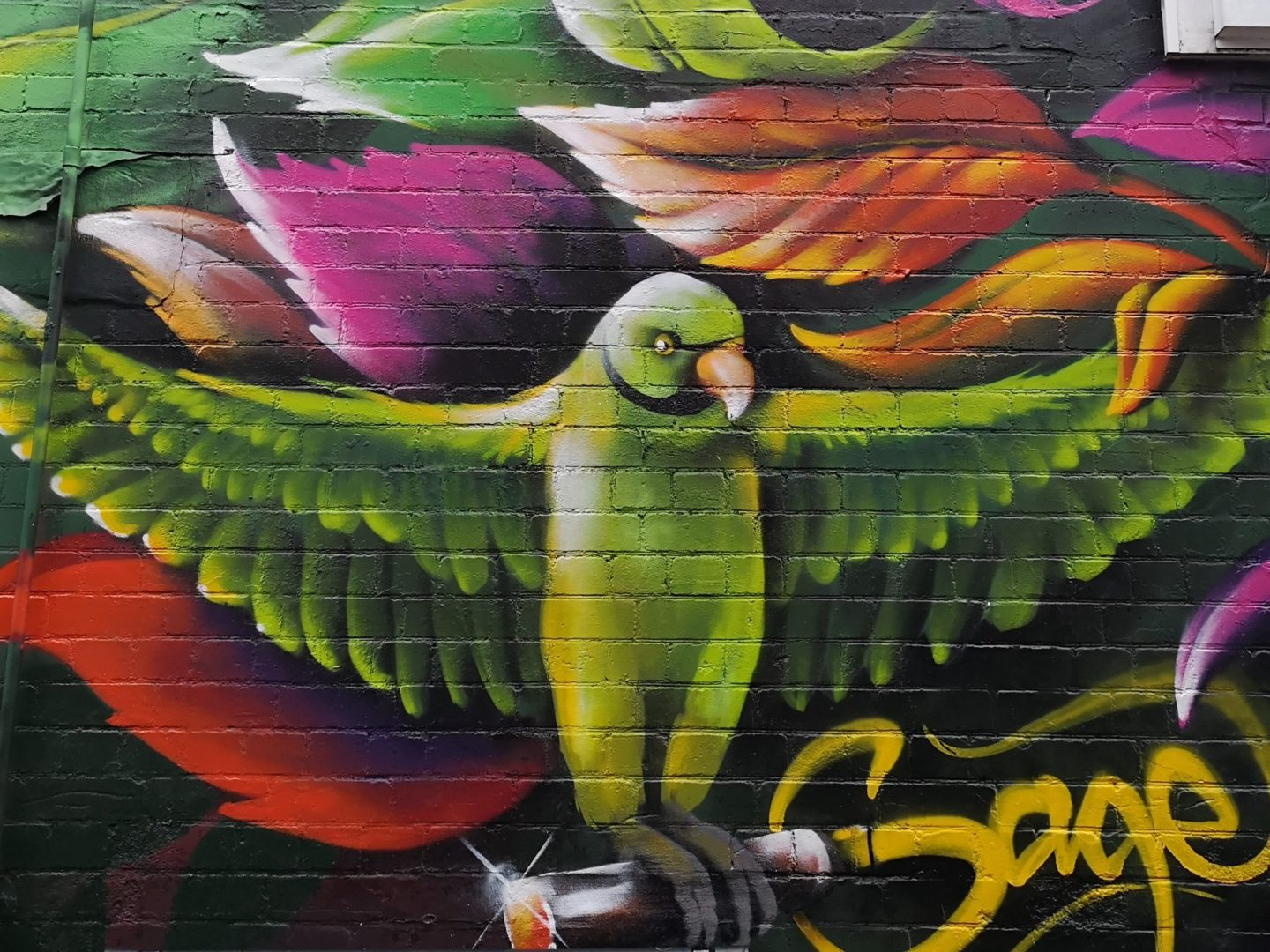 Ringed-neck Parakeet Street Art, Bedminster, Bristol
