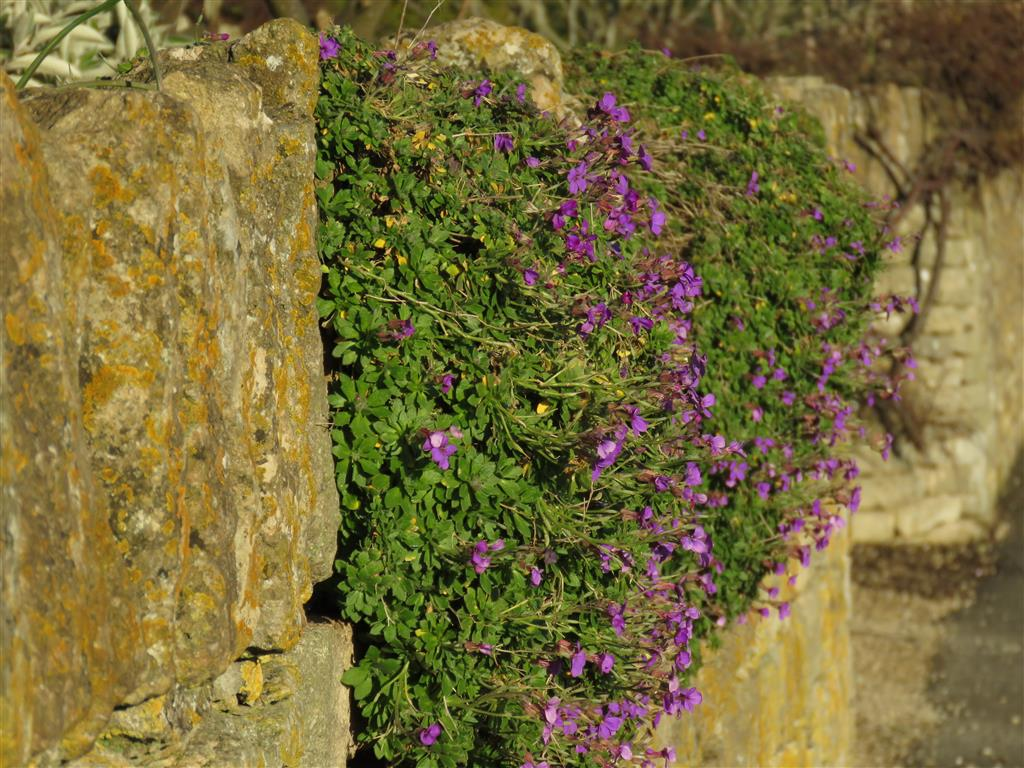 Flowers, Cotswolds