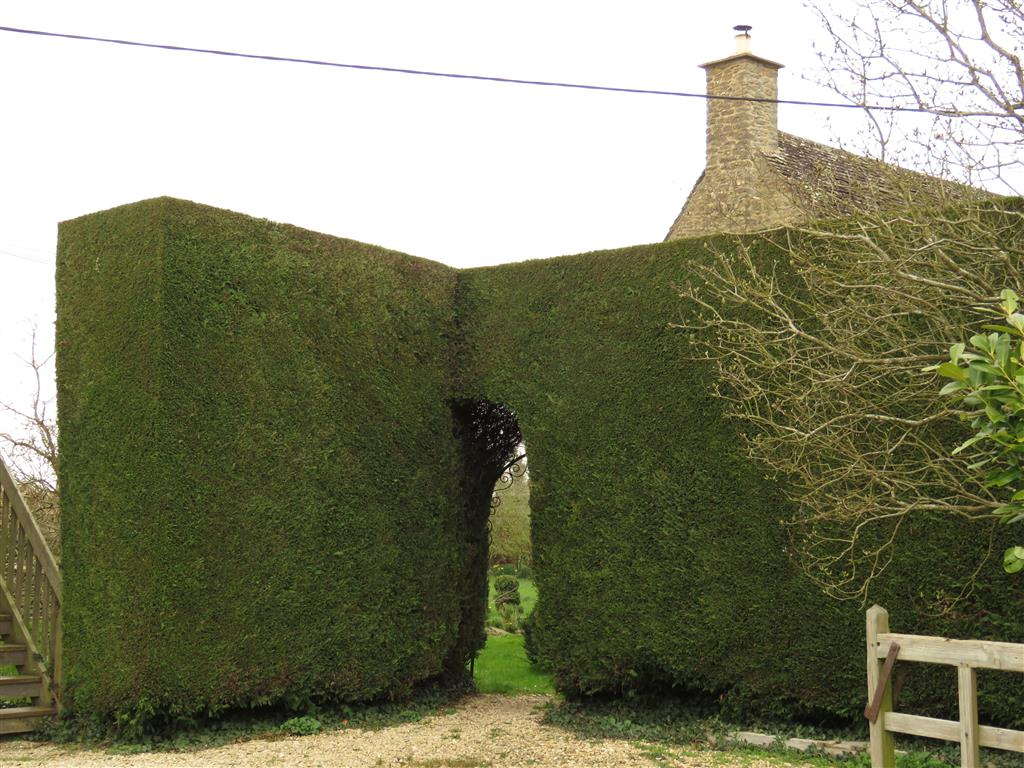 Hedge, South Cerney