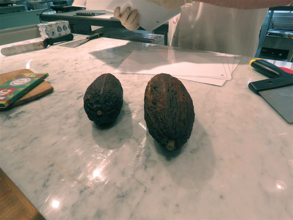 Cacao (cocoa) pods at Rococo Chocolates, Belgravia, London