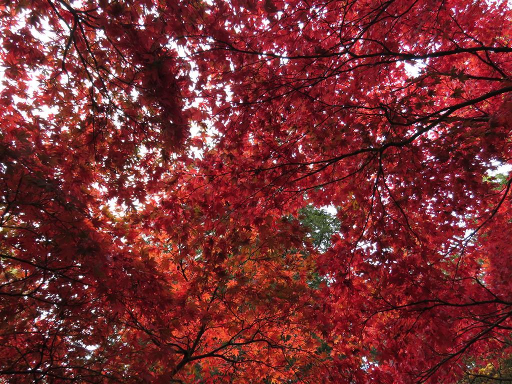 Autumn colours at Westonbirt Arboretum, Gloucestershire.