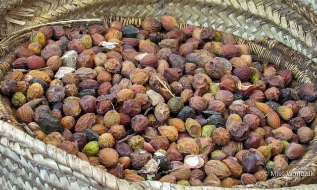 Hvad er argan olie? Besøg på en argan olie fabrik i Marokko