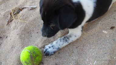 Cute puppy playing, Sanur Beach Bali