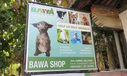 BAWA Bali 🐾 (Bali Animal Welfare Association)