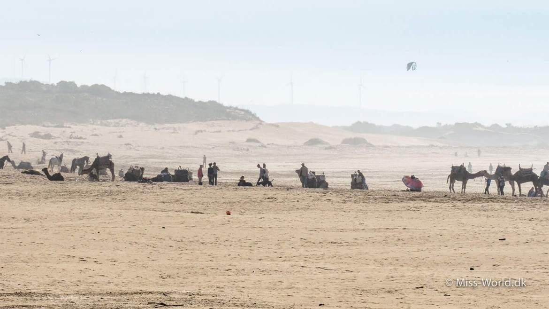 Camel Caravan on the Beach, Essaouira, Morocco