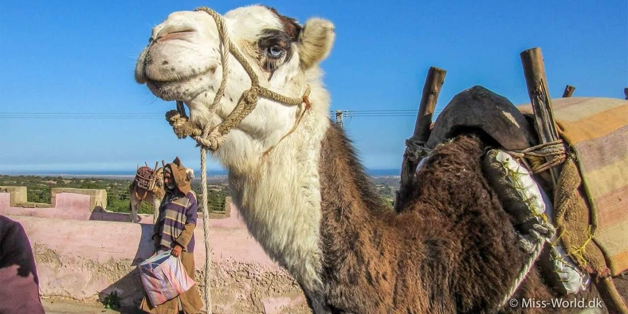14 Instagrambilleder fra Marokko