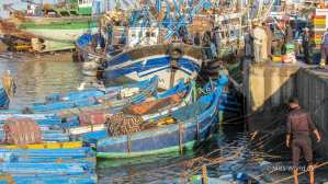 Essaouira Fishing Port - Everybody is excited to see the catch of the day, including the seagulls