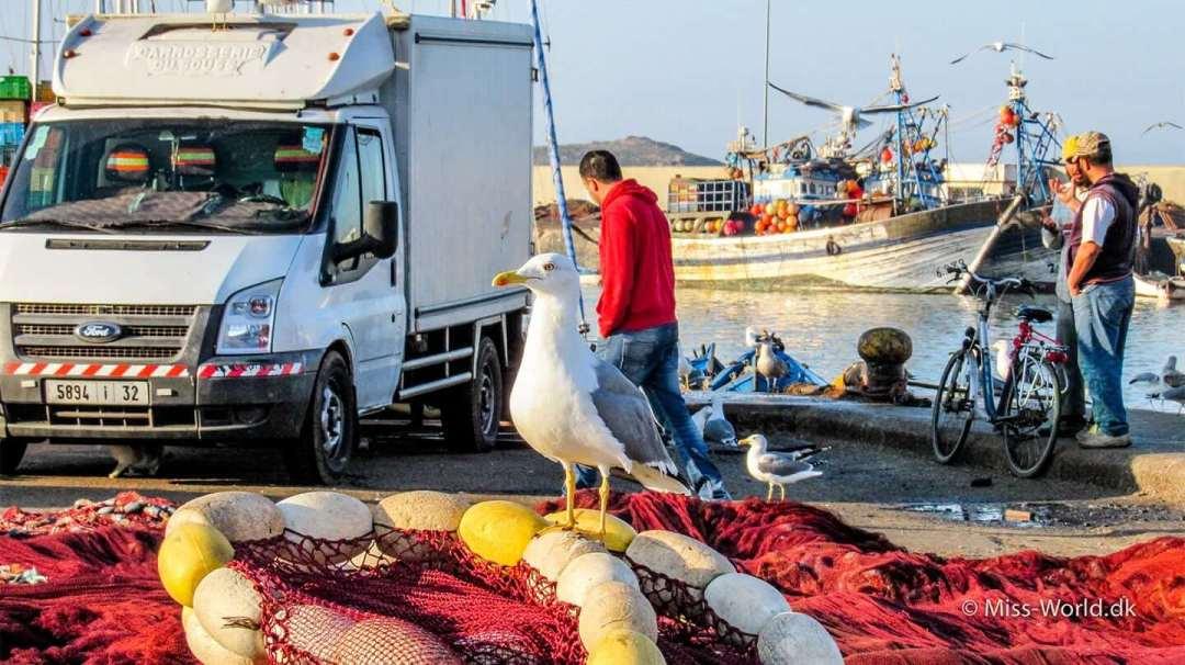 A seagull in Essaouira Harbour