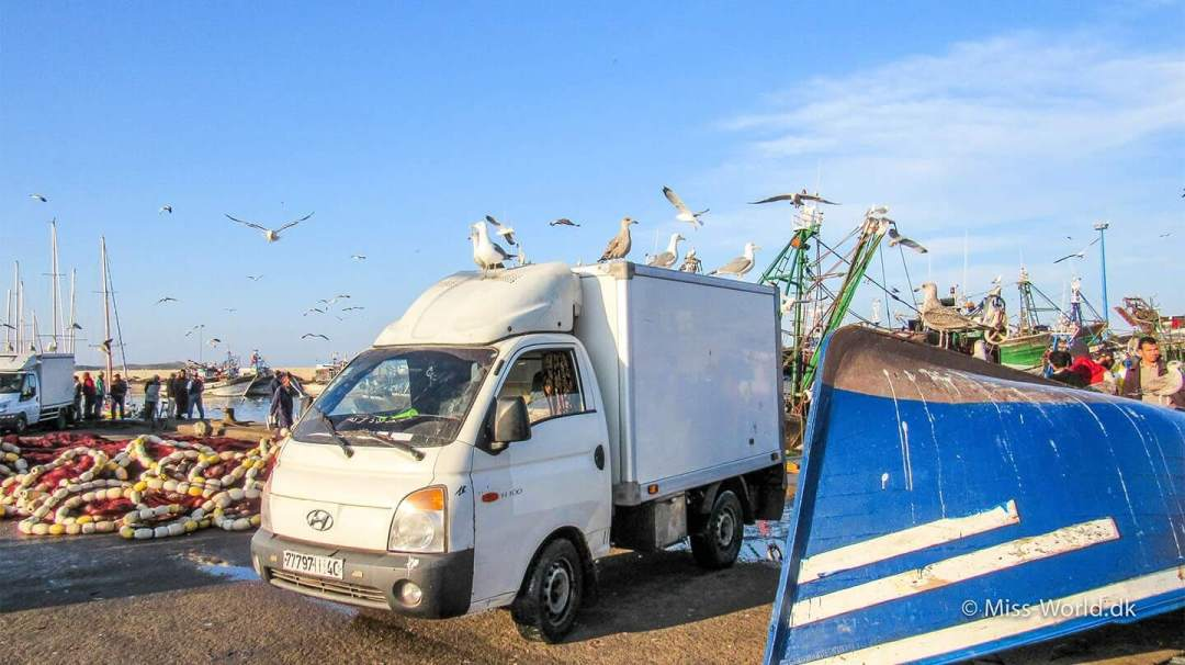 Essaouira Harbour a van full of seagulls